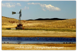 Marsh in the Sandhills photo by Paul Johnsgard
